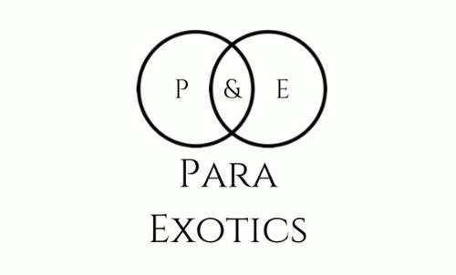 Para Exotics Logo 500x302 - Para Exotics